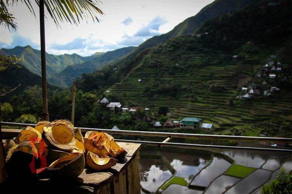 Filipinas baguio coconuts