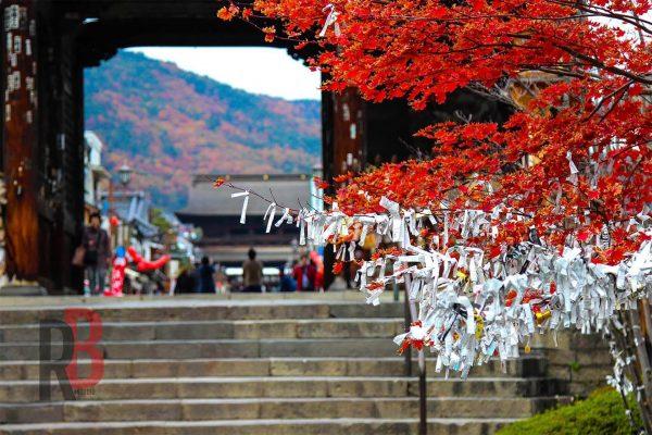 japan nagano tree
