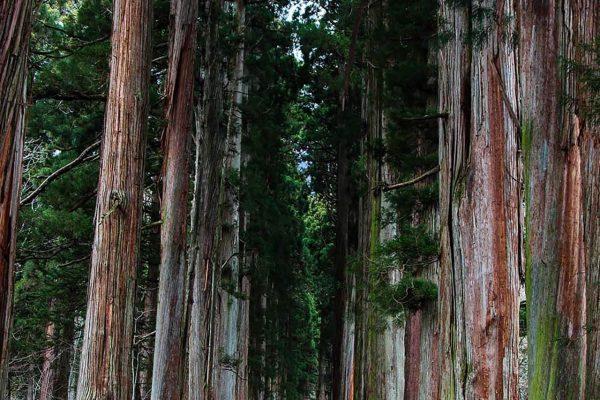Japan Nagano forest