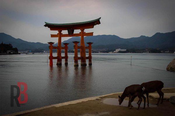 japan hiroshima tori