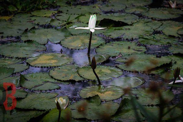 taiwan Yilan outstanding flower